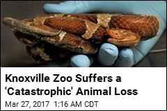 Dozens of Reptiles Found Dead at Knoxville Zoo