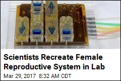 Scientists Recreate Female Reproductive System in Lab