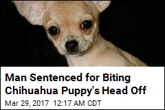 Man Gets 7 Years for Biting Head Off Chihuahua Puppy