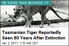 Extinct Tasmanian Tiger Reportedly Spotted in Australia