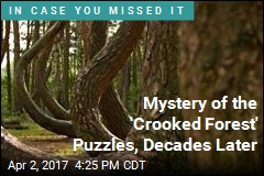 Mystery of the 'Crooked Forest' Puzzles, Decades Later