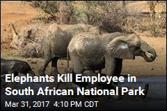 Park Employee Killed in Elephant Herd Attack