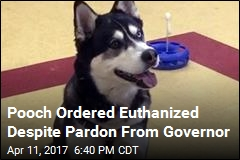 Pooch Ordered Euthanized Despite Pardon From Governor