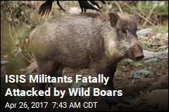 ISIS Meets Deadly New Enemy: Wild Boars