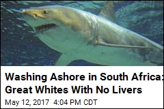 Washing Ashore in South Africa: Dead Sharks With No Livers