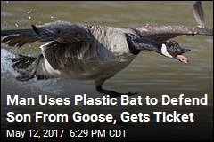 Man Uses Plastic Bat to Defend Son From Goose, Gets Ticket