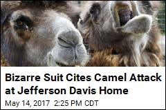 Woman Sues Over Camel Attack at Jefferson Davis Home