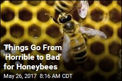 Things Go From 'Horrible to Bad' for Honeybees