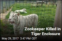 Tiger Kills Zookeeper in 'Freak Accident'