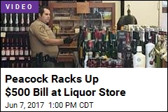Peacock Enters Liquor Store, Takes Out $500 Worth of Wine