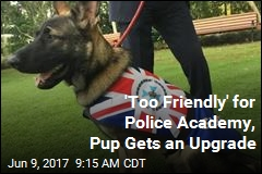 'Too Friendly' for Police Academy, Pup Gets an Upgrade