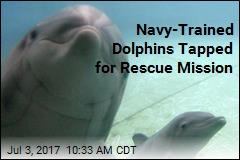 Navy-Trained Dolphins Tapped for Rescue Mission