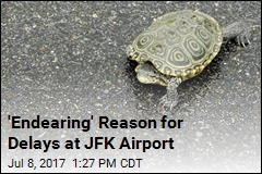 Weird Reason for Delays at NYC Airport: Dozens of Turtles