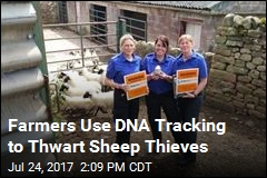 Farmers Use DNA Tracking to Thwart Sheep Thieves