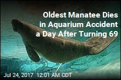Oldest Manatee Dies in Aquarium Accident a Day After Turning 69