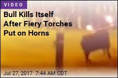 Bull Kills Itself After Fiery Torches Put on Horns