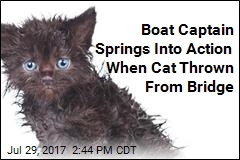 Boat Captain Rescues Cat Thrown Off Florida Bridge