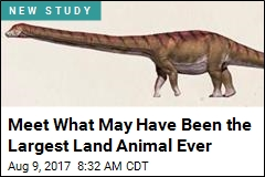 Biggest Dino Ever May Have Been as Heavy as Space Shuttle
