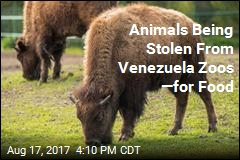 Animals Being Stolen From Venezuela Zoos —for Food