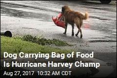Dog Carrying Bag of Food Is Hurricane Harvey Champ