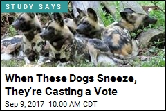 When These Dogs Sneeze, They're Casting a Vote