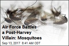 Texas' Post-Harvey Scourge: Mosquitoes