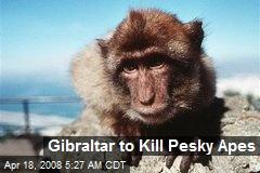 Gibraltar to Kill Pesky Apes