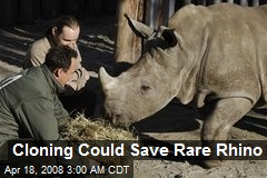 Cloning Could Save Rare Rhino