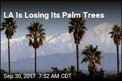 LA's Iconic Trees Are Dying Off