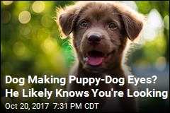 Study: Dogs Make More Faces When Humans Are Looking
