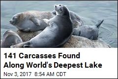 On Shoreline of World's Deepest Lake, 141 Dead Seals