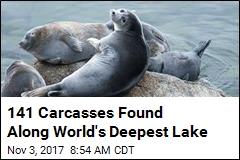 On Shoreline of World's Deepest Lake, 141 Dead Seals