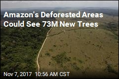 Brazil Begins 'World's Largest Tropical Reforestation' Effort