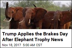 Trump to Hold Off on Allowing Elephant Trophies—for Now