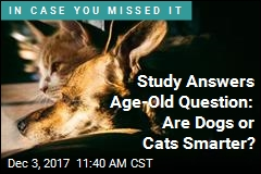 Study Answers Age-Old Question: Are Dogs or Cats Smarter?
