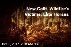 Homes, Horses Burn in New Calif. Wildfire