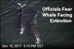Officials Fear Whale Facing Extinction