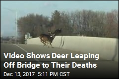 'Horrifying': Drivers Watch Deer Take Fatal Plunge Off Bridge
