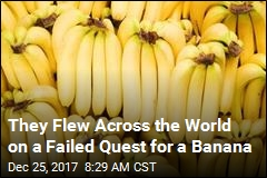 They Flew Across the World on a Failed Quest for a Banana