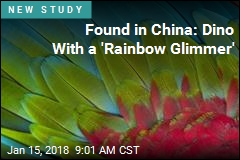 Found in China: Dino With a 'Rainbow Glimmer'