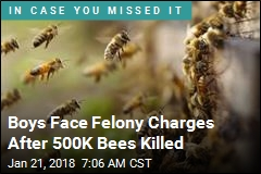 Boys Face Felony Charges After 500K Bees Killed