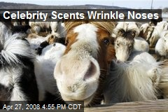 Celebrity Scents Wrinkle Noses