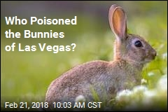 Who Poisoned the Bunnies of Las Vegas?