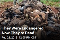 They Were Endangered, Now They're Dead