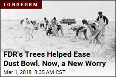 FDR's Trees Helped Ease Dust Bowl. Now, a New Worry
