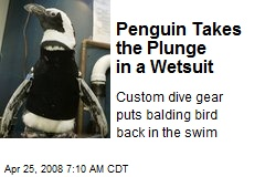 Penguin Takes the Plunge in a Wetsuit