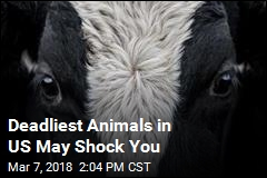 Deadliest Animals in US May Shock You