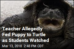 Teacher Allegedly Fed Puppy to Turtle in Front of Students