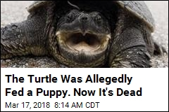 Idaho Euthanizes Turtle That Was Allegedly Fed a Puppy