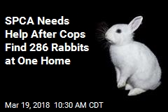 City Allows 2 Rabbits Per Home; This One Had 286